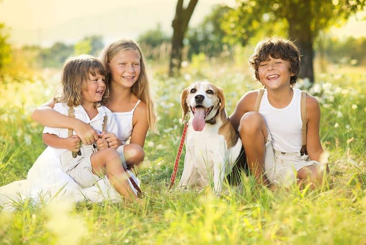 El tamaño del beagle lo hace ideal para cualquier tipo de vivienda