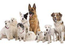 comprar cachorros a criadores profesionales