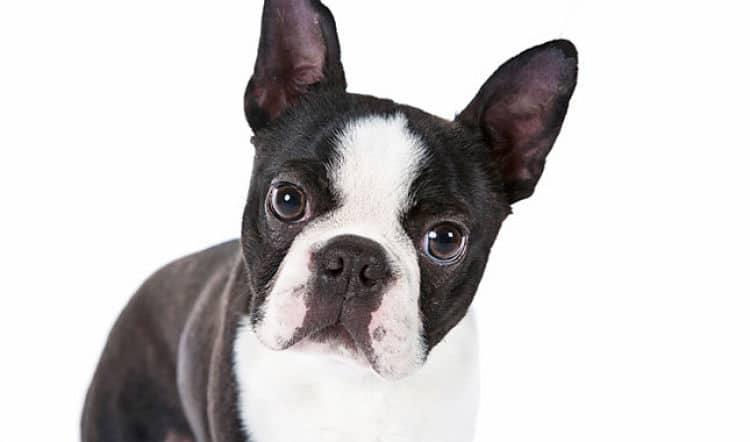 perros-que-no-sueltan-pelo4