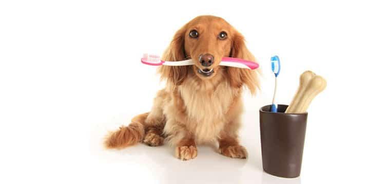 El cuidado dental de nuestras mascotas debe ser tomado en serio para evitar enfermedades