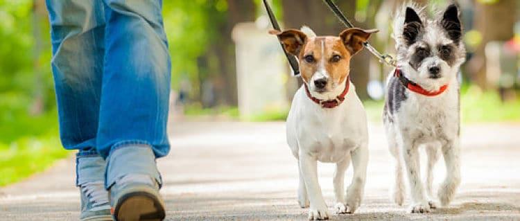 Si el viaje es muy largo debemos programar paradas específicas para nuestro perro