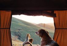 Camping que admiten perros