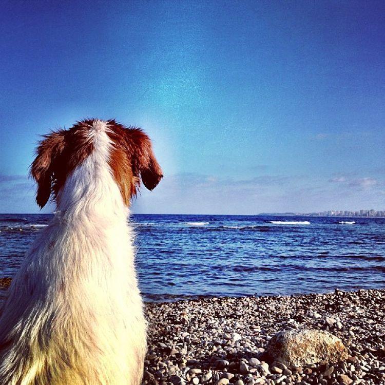 Campings que aceptan perros
