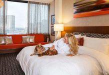 hoteles-que-admiten-perros-en-Madrid2