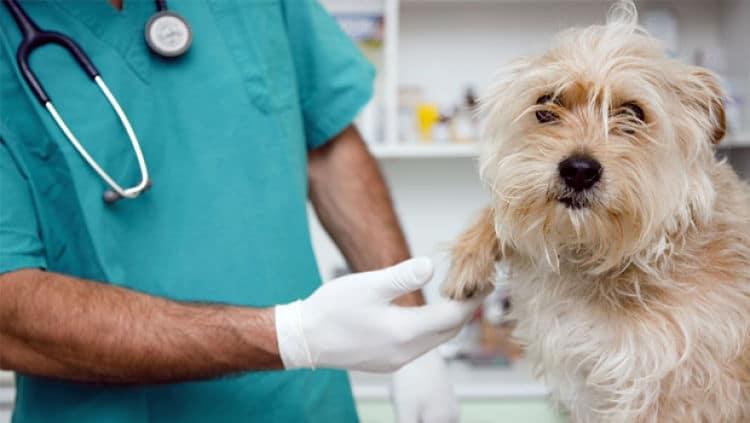 tratamiento de roña en perros