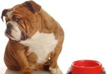 Por qué mi perro no quiere comer