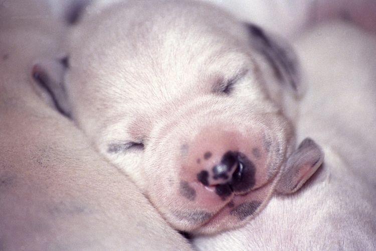 a qué edad abren los ojos los perros