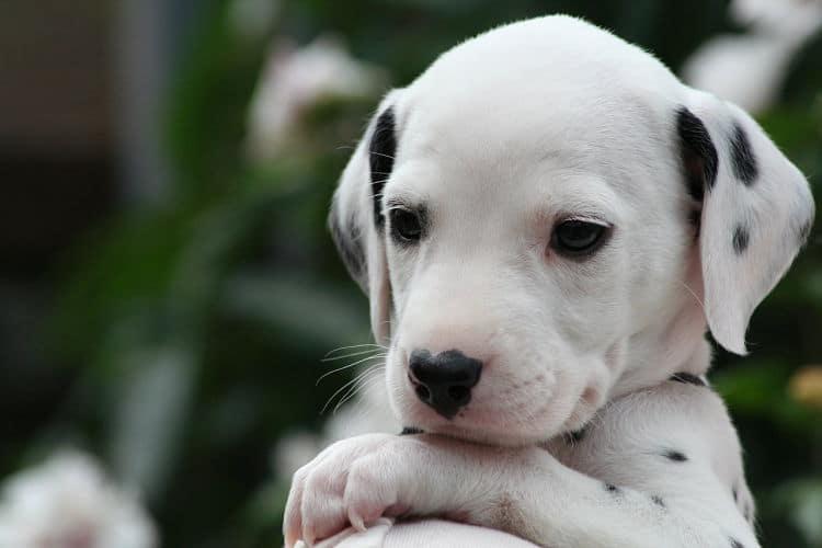 cuándo abren los ojos los perros