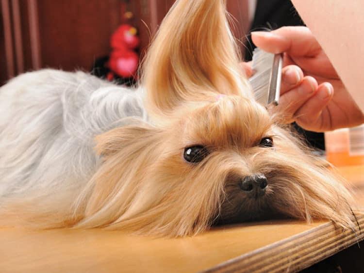 Los perros de pelo largo requieren más cuidado para mantener su pelaje