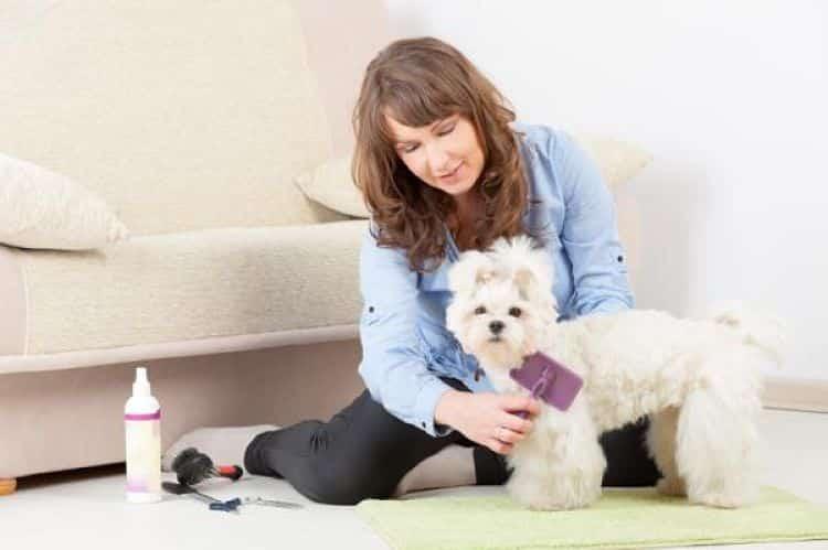 Para los perros de pelo rizado es importante mantenerlos libres de nudos