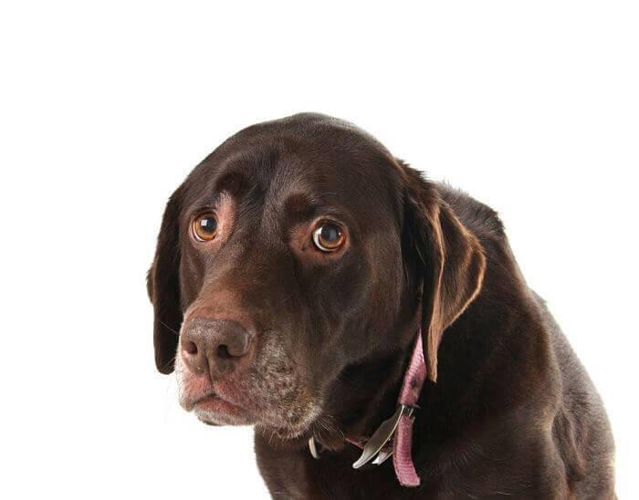 diarrea en los perros