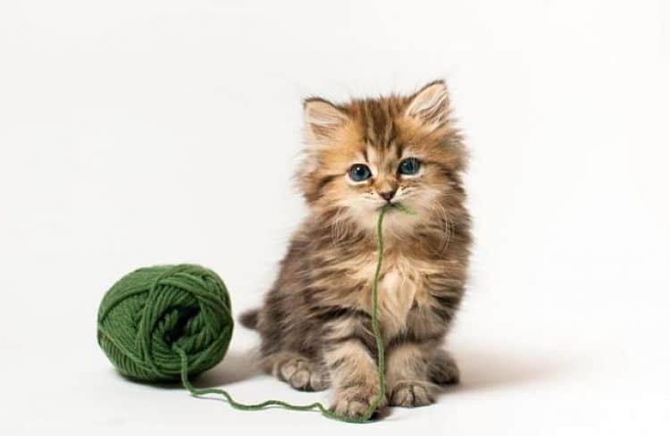 Etapas del crecimiento del gato