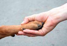 Por que adoptar un perro