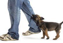 Cómo Educar a un Perro para que No Muerda