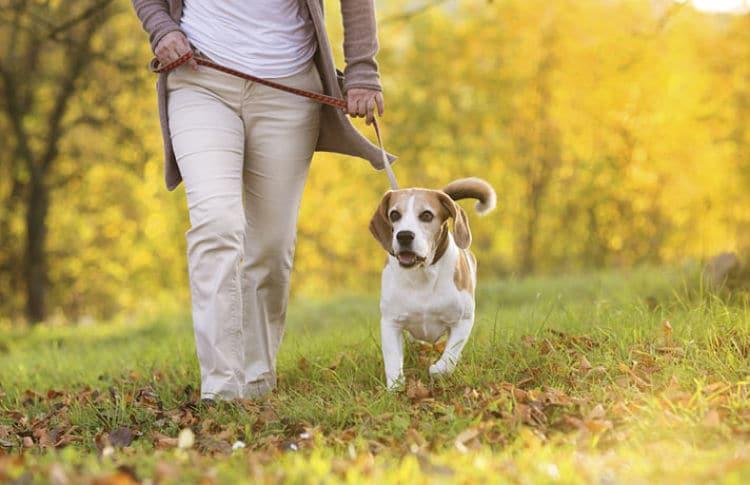 Descubre cómo ayudar a tu perro a desestresarse