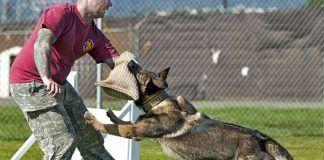 cómo entrenar a un perro para atacar