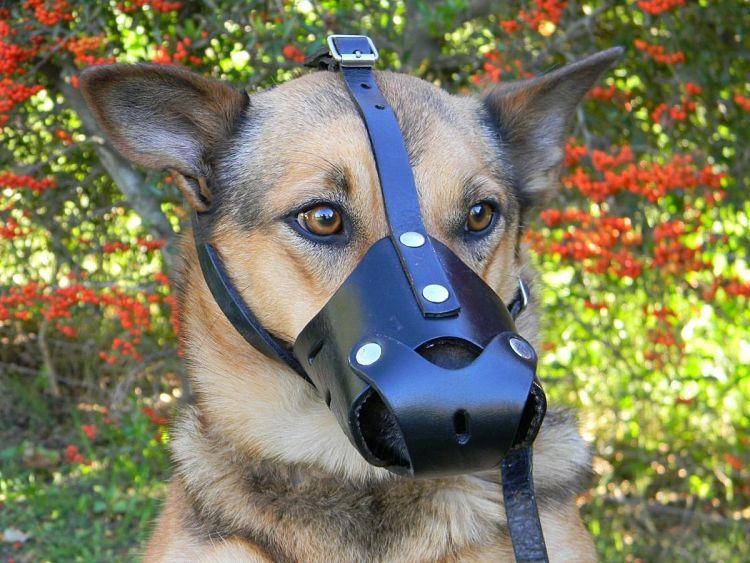 Bozal casero para perros