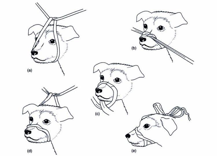 cómo hacer un bozal para perro