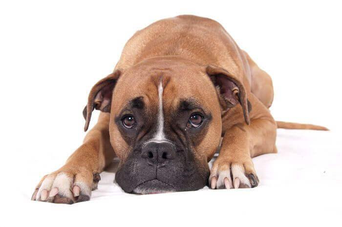 causas del estreñimiento en perros