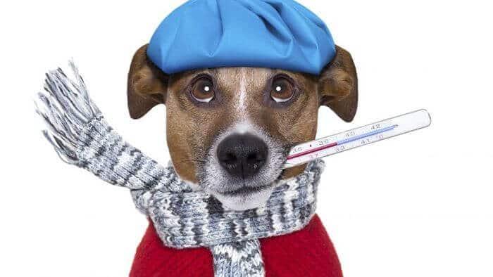 como tratar el resfriado en perros