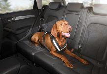 Cinturón de seguridad para perros