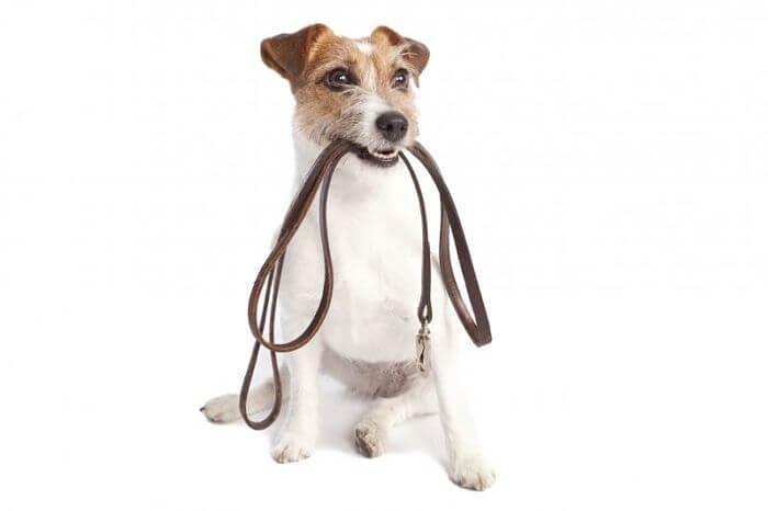 Cómo hacer para que un perro obedezca