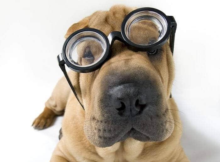 Qué color ven los perros
