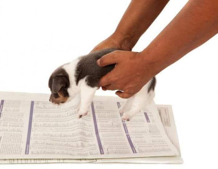 cómo-hacer-para-que-mi-perro-haga-sus-necesidades-en-un-solo-lugar_opt-compressor (1)
