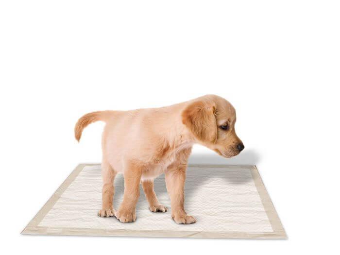 cómo hacer para que tu perro haga sus necesidades en un solo lugar
