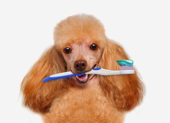 como cepillar los dientes a mi perro