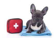 envenenamiento en perros