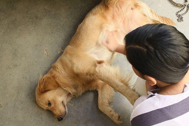 Debemos mantener la calma y acompañar a nuestra mascota durante las crisis
