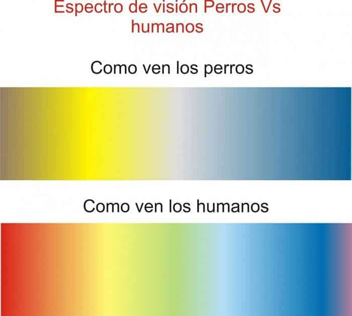 que color ven los perros