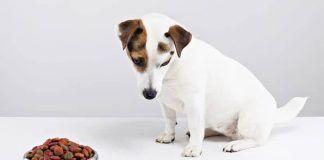 síntomas de la depresión en perros