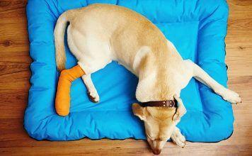 fracturas en perros