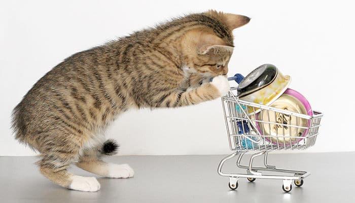 alimentacion sana en gatos