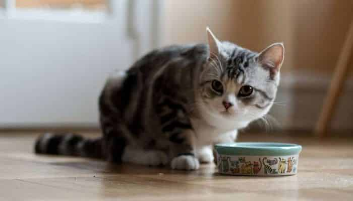 alimentos que un gato puede consumir