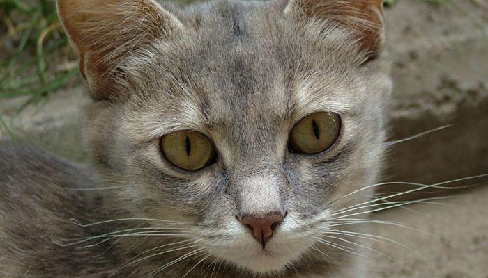los gatos con diarrea