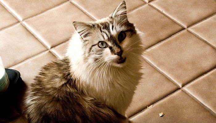 la diarrea en gatos