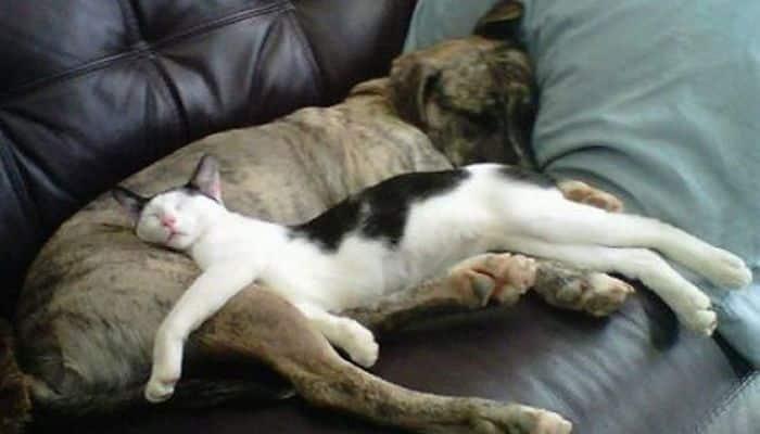 el arte de dormir de los gatos