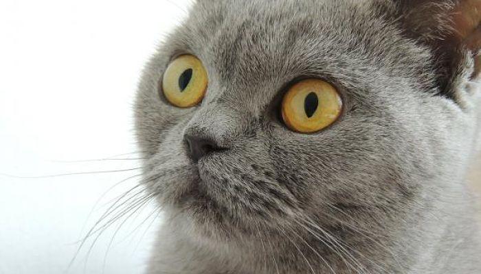 Las enfermedades mas comunes en gatos