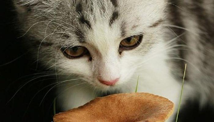 gatos con envenenamiento