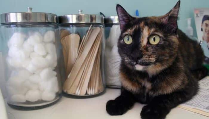 gatos envenenados