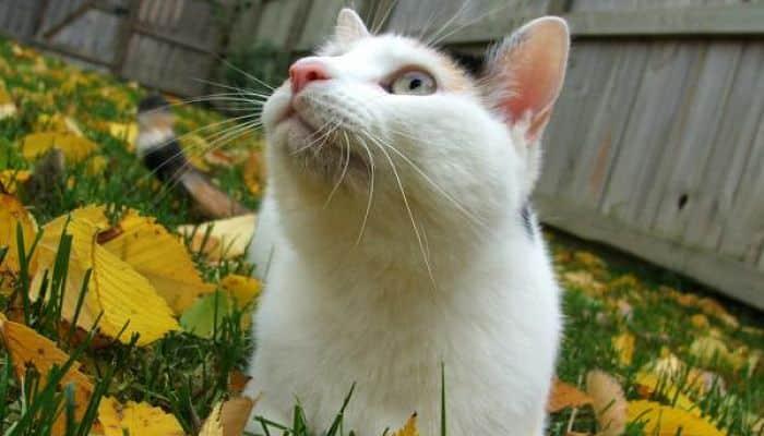 el envenenamiento en los gatos