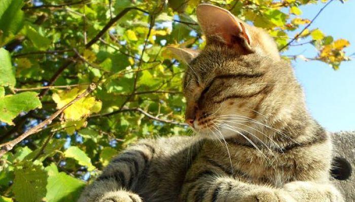 el estreñimiento en gatos