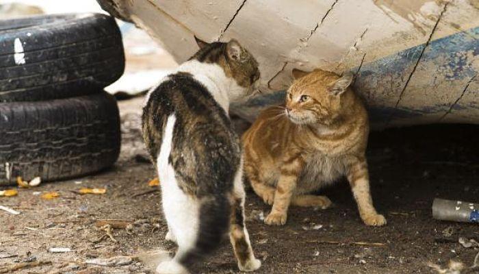 gatos con sida