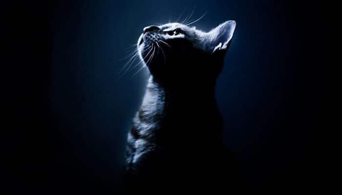 Es cierto que los gatos tienen 7 vidas
