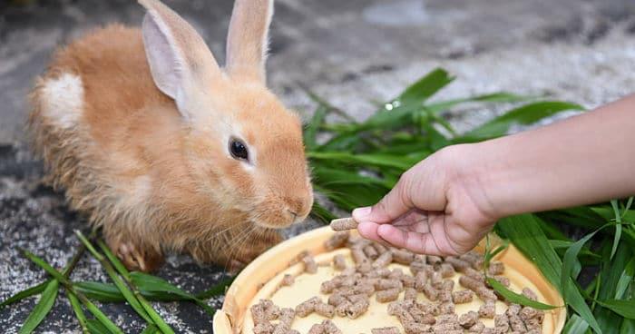 alimentación-de-los-conejos-2