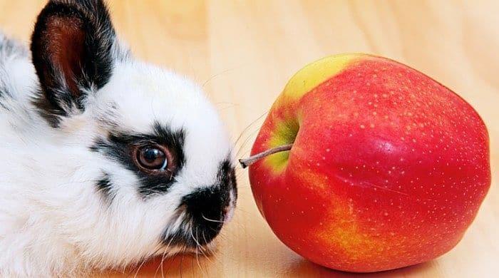 alimentación-de-los-conejos-4