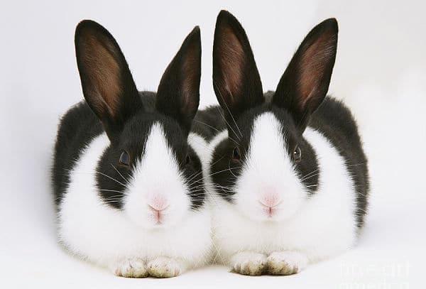 cuantas-razas-de-conejos-hay-4